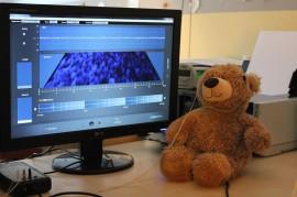 Unser Kuschel-Teddy für das Neurofeedback